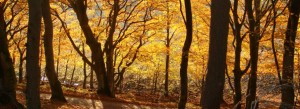SkovEfterår